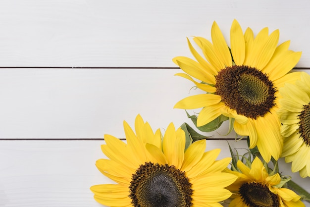 Primer plano de girasoles amarillos frescos sobre fondo blanco de madera Foto gratis