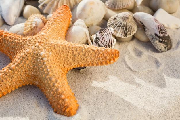 Primer Plano De Guijarros Estrellas De Mar Y Varias Conchas De Mar - Fotos-de-conchas-de-mar
