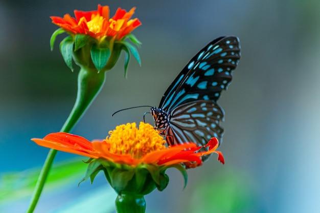 Primer plano de una hermosa mariposa sobre una flor de pétalos de naranja Foto gratis