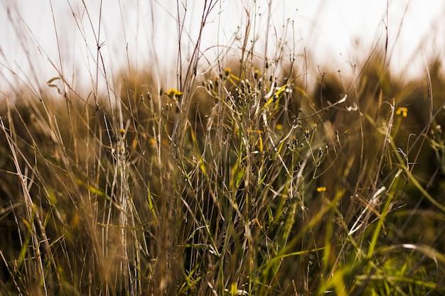 Primer plano de la hierba verde Foto gratis