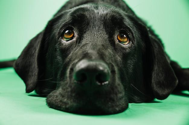 Primer plano hocico de perro Foto gratis
