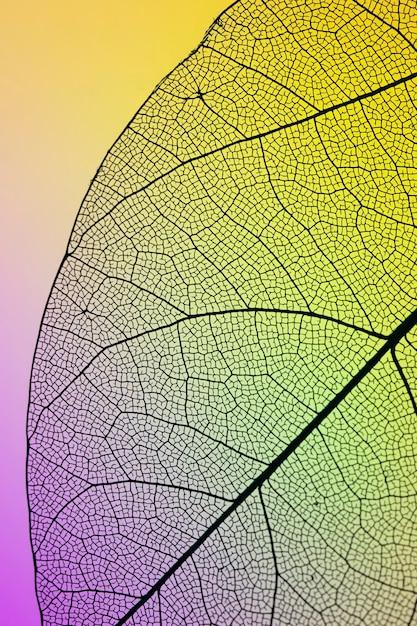 Primer plano de la hoja verde de otoño Foto gratis