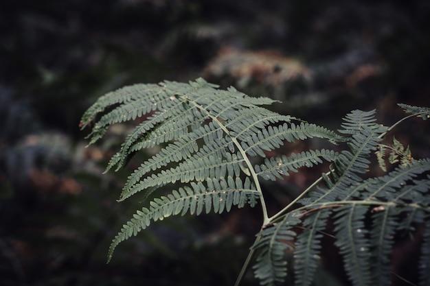 Primer plano de hojas de helecho rodeado de vegetación en un jardín. Foto gratis