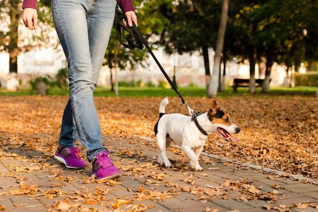 Primer plano lindo perrito caminando al aire libre Foto gratis