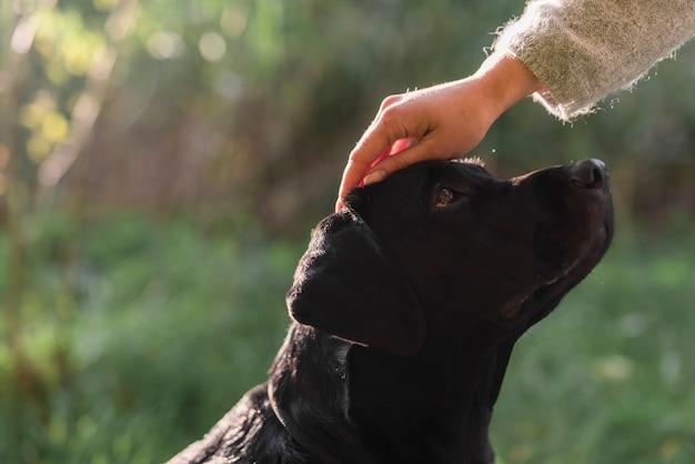 Primer plano de la mano de la mujer acariciando la cabeza de perro en el parque Foto gratis