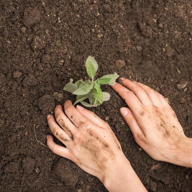 Primer plano de la mano de una persona plantando plántulas en el suelo Foto gratis
