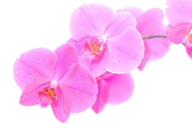 Primer plano de orquídea delicada Foto gratis