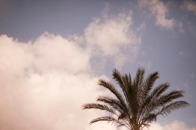 Primer plano de palmera contra el cielo Foto gratis