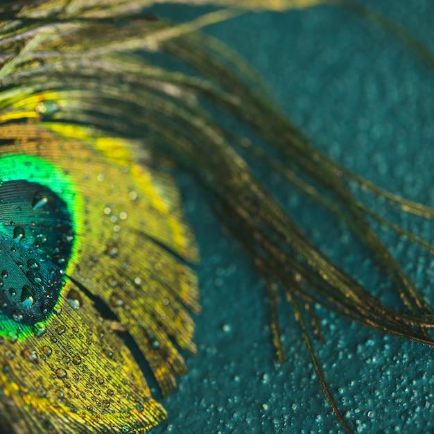 Primer plano de la pluma de pavo real en el fondo con textura Foto gratis