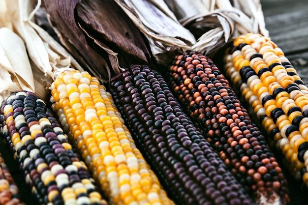 Primer plano de tallos de maíz indio con granos coloridos Foto Premium