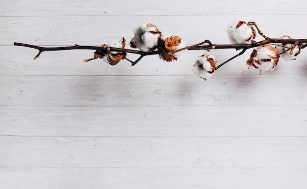 Primer plano de vainas de semillas de algodón maduras en la planta de algodón contra el telón de fondo de madera Foto gratis