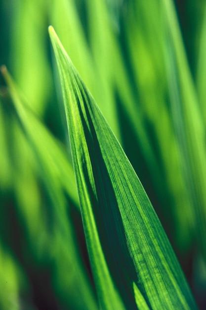 Primer plano vertical de una hoja verde con un fondo natural borroso durante el día Foto gratis