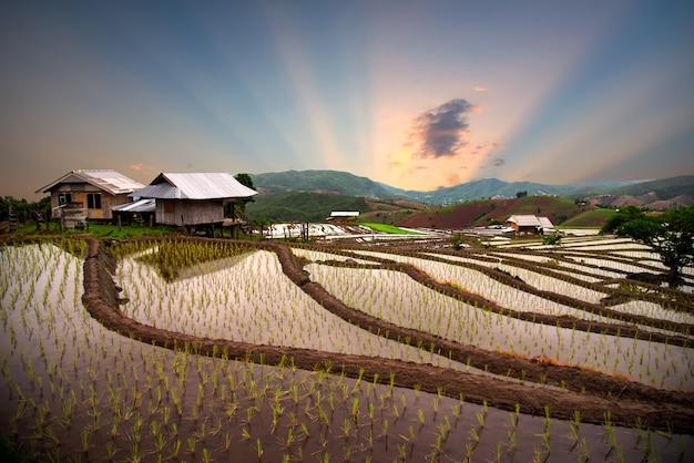 Prohíba La Terraza Del Arroz De Mae Klang Luang En El Norte