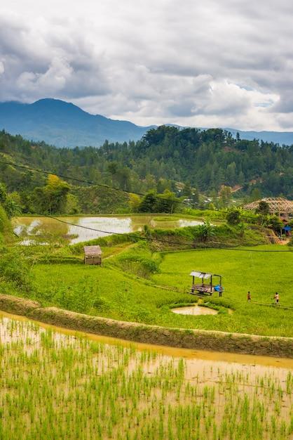 Pueblo tradicional de toraja en un idílico paisaje rural Foto Premium