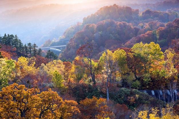 Puesta de sol bosque otoño akita japón Foto Premium