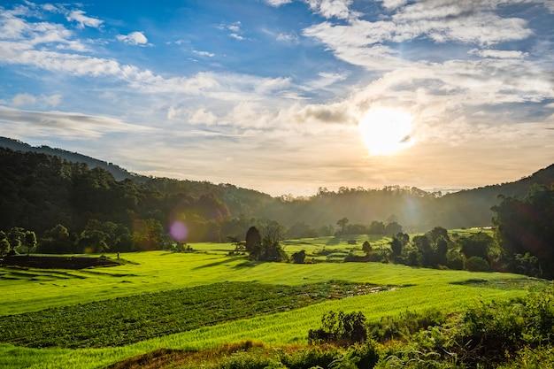 Puesta de sol en campo de granja de arroz tailandia Foto gratis