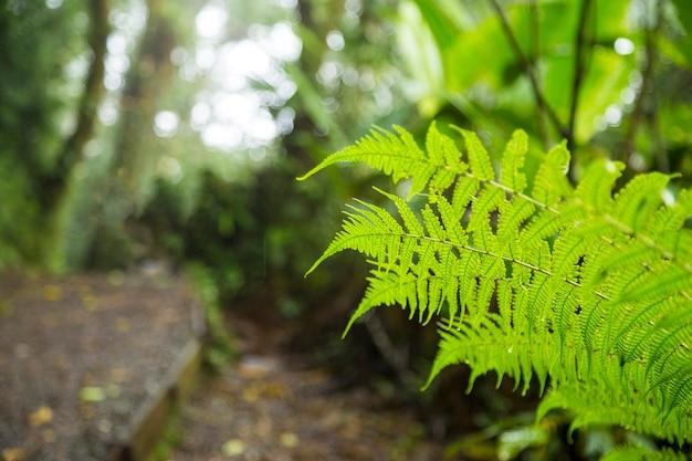 Rama de helecho verde fresco en la selva Foto gratis