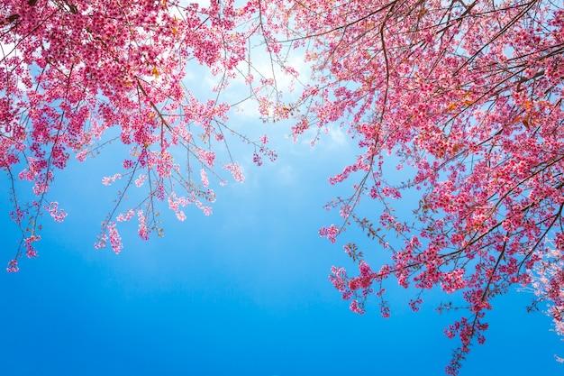 Ramas de árbol bonitas con flores rosas Foto gratis