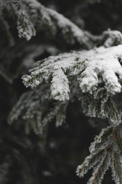 Ramas congeladas de hojas y nieve. Foto gratis