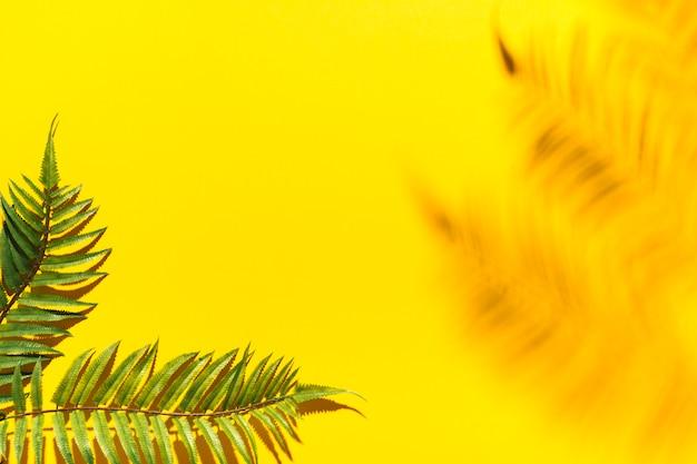Ramas de palma y sombra borrosa en superficie colorida Foto gratis