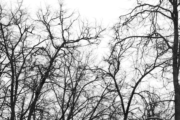 Ramas sin hojas de árboles de invierno de parque | Descargar Fotos ...