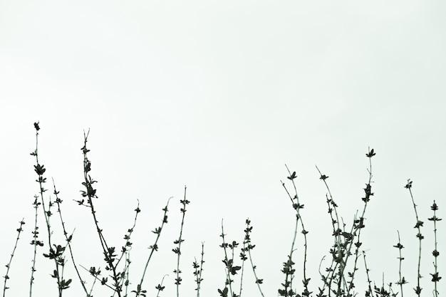 Ramas sin hojas de una copa de rbol contra el cielo for Arboles de hoja perenne sin fruto