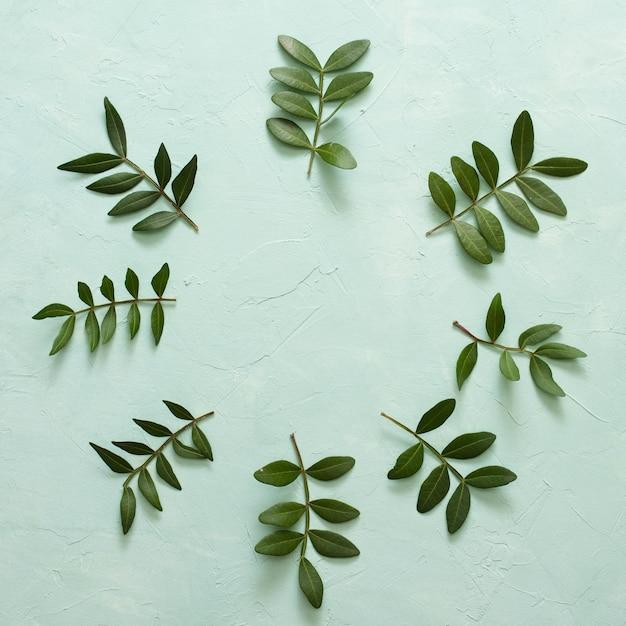 Ramita de hojas verdes dispuestas en marco circular sobre superficie verde pastel Foto gratis