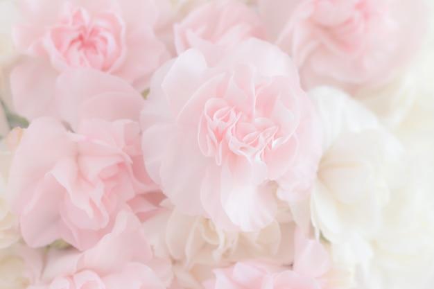 Ramo Rosado De Las Flores Del Clavel En Fondo Rosa Claro