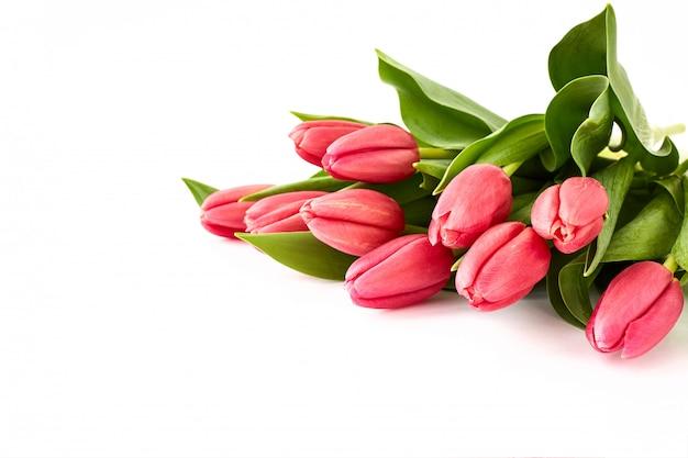 Ramo rosado de los tulipanes en el fondo blanco. Foto Premium