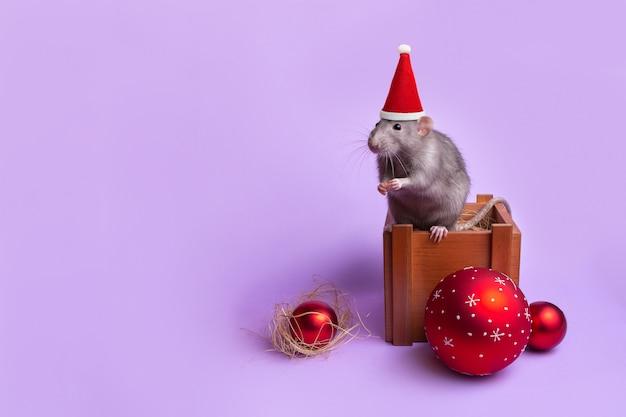 Rata decorativa dumbo en un sombrero de santa en una caja de madera. juguetes de año nuevo. año de la rata. año nuevo chino. mascota encantadora Foto Premium
