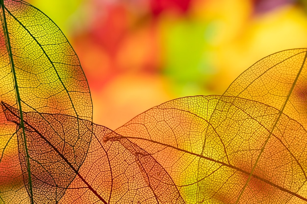 Resumen hojas naranjas transparentes Foto gratis