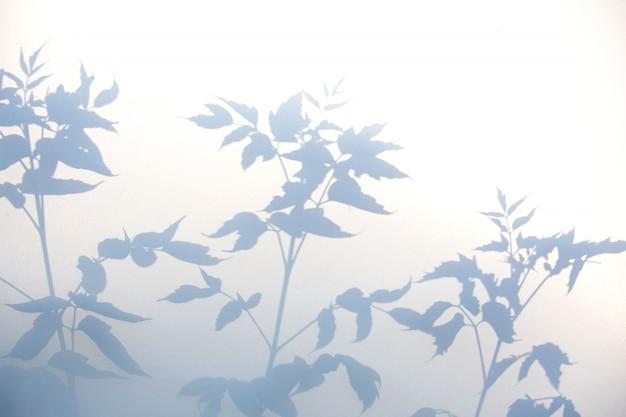 Resumen sombra gris de hojas naturales en textura blanca Foto Premium
