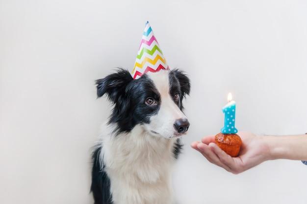Retrato divertido del lindo border collie sonriente del perro de perrito que lleva el sombrero tonto del cumpleaños que mira la torta del día de fiesta de la magdalena con la vela número uno aislada en la pared blanca. concepto de fiesta de feliz cumpleaños Foto Premium