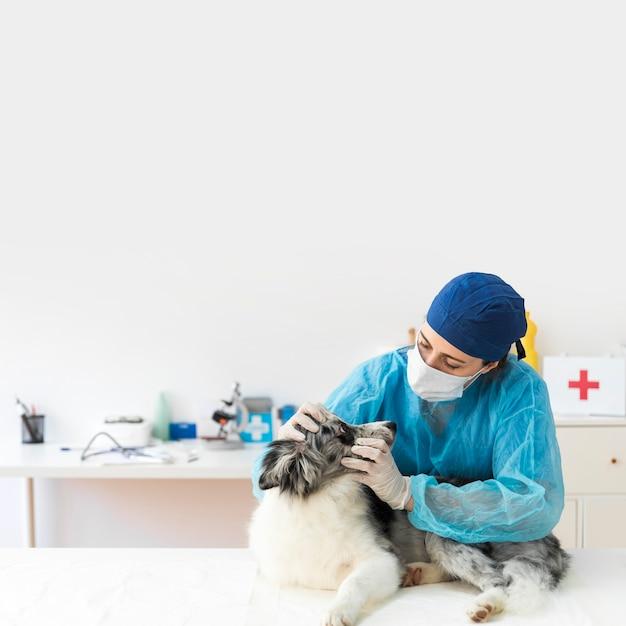 Retrato de mujer veterinaria examinando el perro en la clínica Foto gratis