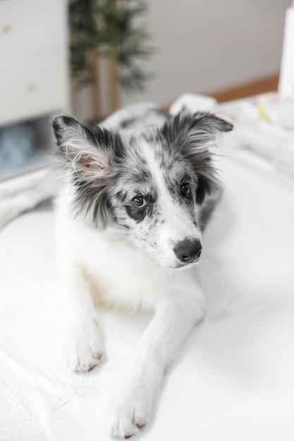 Retrato de perro blanco en la mesa en la clínica Foto gratis