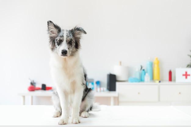 Retrato de un perro en la mesa blanca en la clínica veterinaria Foto gratis