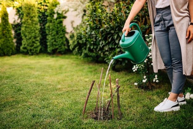 Riego de una planta en el jardín de primavera en casa. Foto Premium