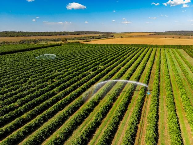Riego en plantaciones de naranjos en un día soleado en brasil. Foto Premium