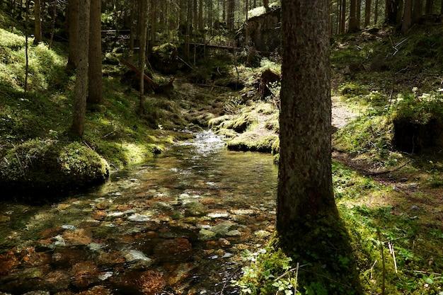 Río angosto en un bosque rodeado de hermosos árboles verdes Foto gratis