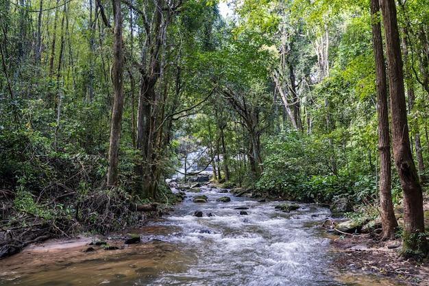 Río rodeado de árboles en la jungla Foto Premium