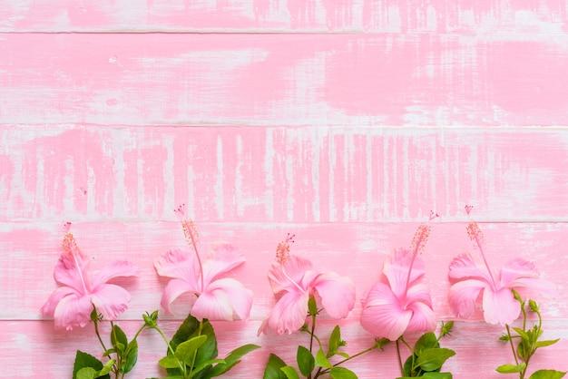 Rosa Hibiscus Rosa Sinensis Flores En Un Fondo De Color