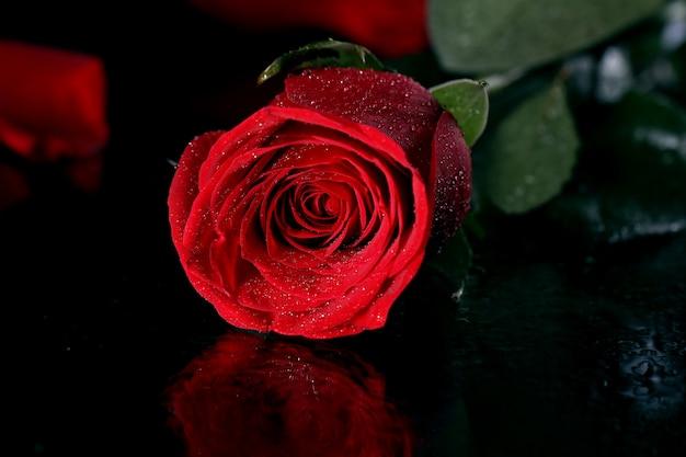 Rosa roja en la oscuridad Foto gratis