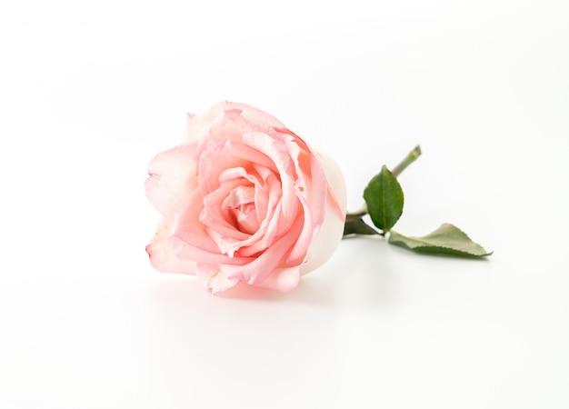 Rosa y rosa blanca Foto gratis