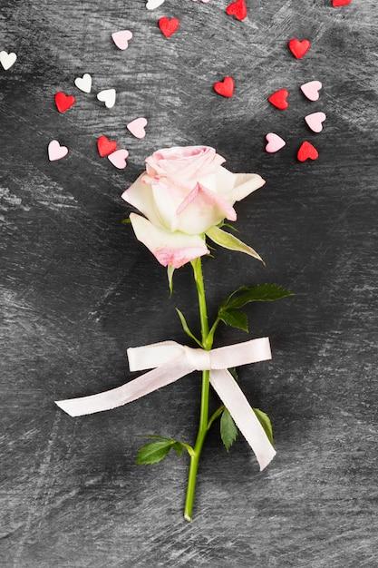 Rosa rosa con cinta blanca sobre un fondo oscuro. vista superior Foto Premium