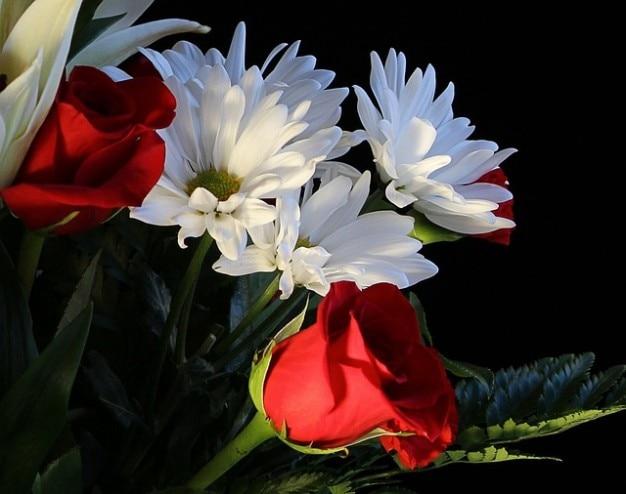 Rosas fragantes bastante margaritas flores | Descargar ...