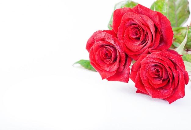 Rosas Rojas Bonitas Descargar Fotos Gratis