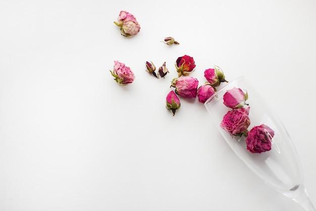 Rosas en un vaso sobre un fondo blanco Foto Premium