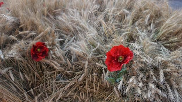 Resultado de imagen para Flores de Rusia imágenes