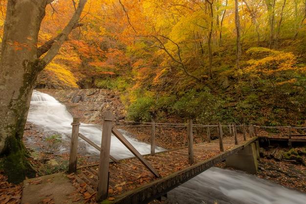 Ruta de senderismo cerca de un río en otoño Foto Premium