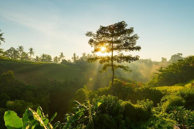 Salida del sol sobre la selva de bali Foto gratis